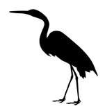 super egret ilustracji