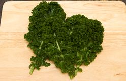 Curly kale home grown Stock Photography