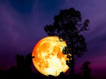 Super full blood moon back middle silhouette tree in park. Super blue blood moon back middle silhouette tree in park, Elements of this image furnished by NASA Stock Photos