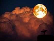 Super full blood moon and sattlelite disk on dark orange heap cl Stock Image