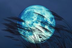 Free Super Full Harvest Moon On Night Sky Back Grass Flower In The Field Royalty Free Stock Photo - 159266865