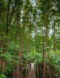 Super großer magle Baum Mangroven-Sumpfwald Thailands im tropischen lizenzfreie stockfotografie