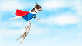 Super Hero Dog Flying Over White. Funny conceptual photo of super hero dog flying through clouds while rescuing a kitten stock photos