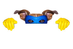Super hero dog. With  hiding behind a blank banner Royalty Free Stock Photography