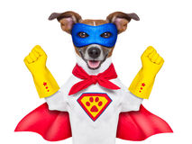 Super hero dog. With  red cape and a  blue mask Royalty Free Stock Image