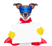 Super hero dog. With red cape and a blue mask holging a placard stock photography