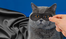 Super hero in mask cat portrait with black cloak. Super hero cat portrait with black cloak on blue background royalty free stock photos