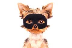 Super hero puppy dog Royalty Free Stock Photos
