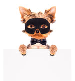 Super hero puppy dog Royalty Free Stock Image