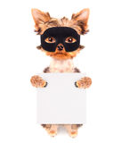 Super hero puppy dog. Wearing a black mask and holding white paper banner Royalty Free Stock Image