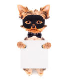 Super hero puppy dog. Wearing a black mask and holding white paper banner Royalty Free Stock Images