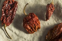 Super Hot Spicy Scorpion Bhut Jolokia Pepper Stock Photo