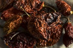 Super Hot Spicy Scorpion Bhut Jolokia Pepper Stock Photos