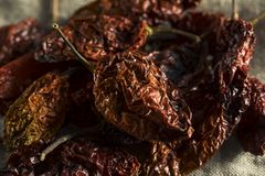 Super Hot Spicy Scorpion Bhut Jolokia Pepper Royalty Free Stock Photos