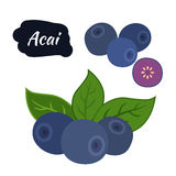 Super karmowa acai jagoda Egzotyczny świeży Amazon odżywianie Mieszkanie styl ilustracja wektor