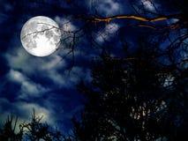 super księżyc sylwetki suchy drzewo Zdjęcie Stock