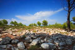 Super landscape of provence Royalty Free Stock Image