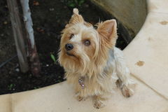 Super leuke hond Royalty-vrije Stock Foto's