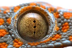 Super macro eye gecko stock photography