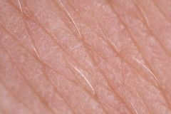Super macro of skin texture Stock Images