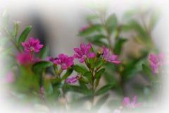 Super macrofoto van tuinbloem Royalty-vrije Stock Foto's