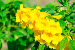 The Super miraculous peak of yellow Flower along the super good day. Stock Photos
