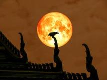 super Mondrückseite des vollen Bluts des Schattenbildvogels auf Tempeldach Lizenzfreie Stockfotos