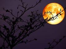 super Mondrückseitenschattenbild des vollen Bluts des Niederlassungsbaums Stockfotografie