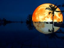 super Mondreflexionskokosnuss-Swimmingpool des vollen Bluts Stockfotos