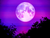 Super moon and blur shadow leaves over forest Royalty Free Stock Photo