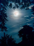 Super Moon Framed by Tree branches Stock Photography