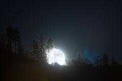 Super moon rising. Supper moon in November 14th as it was rising above a mountain with trees in California stock images