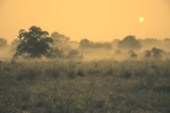 Super MOON Setting Over Foggy Field Royalty Free Stock Photo