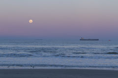 Super moon. View from the beach with birds Royalty Free Stock Image