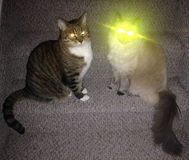 Super powers cat. Cat with super pwers of laser eye beams rag doll cat and tabbie sitting side by side on stairs being cute and fluffy Stock Images