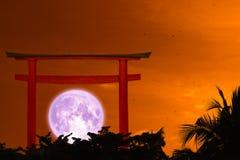 super purple moon back silhouette torii and cloud on night sky stock photo