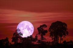 super purple moon back silhouette tree cloud on night sky royalty free stock images
