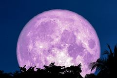 super purple moon dragen fly back silhouette tree plant and cloud on night sky stock photo