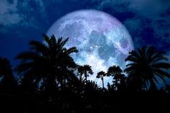 super Rückseitenschattenbild des blauen Mondes in der alten Palmennacht blaues s Lizenzfreie Stockfotos