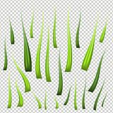 Super realistic, detailed fresh green vector grass. Isolated plant stems for front plan nature illustration. Gradient Royalty Free Stock Images