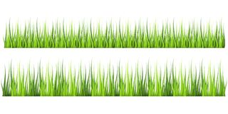 Super realistic, detailed fresh green vector grass. Isolated plant stems for front plan nature illustration. Gradient Royalty Free Stock Photos