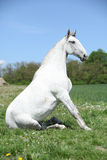 Super sitting horse in nature Stock Photo