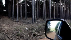 Super slow motion of pine tree forest and car mirror. Car mirror and pine tree forest in super slow motion stock video footage