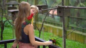 Super slowmotion Schuss einer Mutter und des Sohns in einem Vogelpark eine Gruppe grüne und rote Papageien mit einer Milch einzie stock video