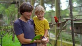 Super slowmotion Schuss eines Vaters und des Sohns in einem Vogelpark einen grünen Papageien einziehen, der auf der Hand des Vate stock video