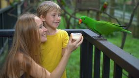 Super slowmotion shot of a mother and son in a bird park feed a group of green and red parrots with a milk stock video