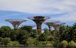 Super Tree Grove. Singapore - August 2016 View of the Super Tree Grove at the Gardens by the Bay in Singapore royalty free stock photography