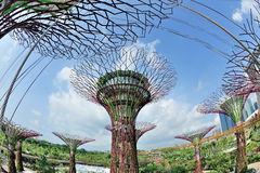 Super tree groves in Gardens by the Bay Stock Photography