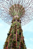 Super tree stands in singapore garden. Super iron tree stands in singapore garden Stock Photos