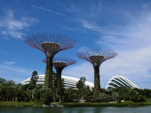 Super Trees with the Flowers and Cloud Domes. Singapore - August 2016 View of the super trees in the Gardens by the Bay in Singapore with the Flowers Dome and royalty free stock image